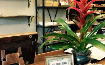 Bromeliad at Bison Bookbinding